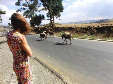 Wachten op het verkeer in Afrika