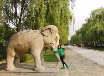 Diervriendelijk olifant knuffelen