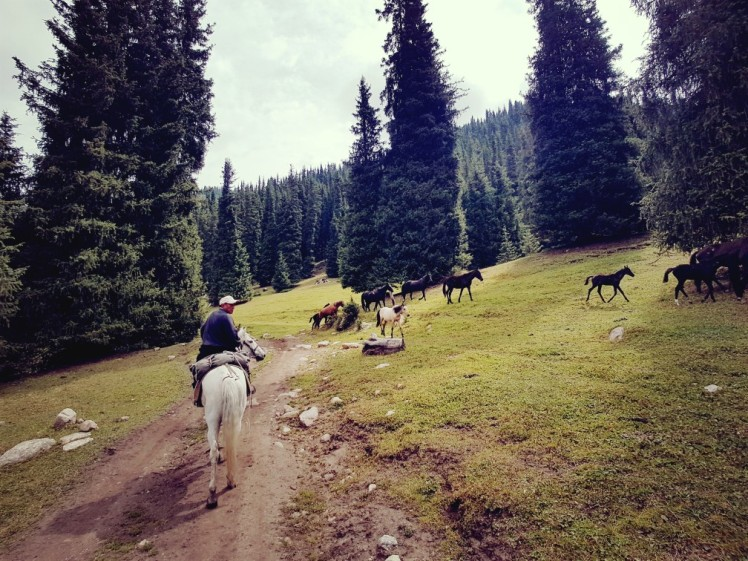 Wilde paarden Kirgizië bergen kamperen