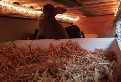 verlichting konijnenhoek