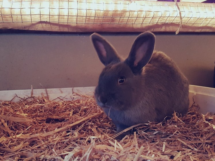 Lotte konijn