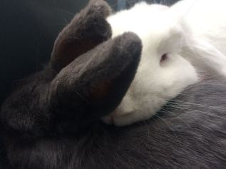 konijn loki lotte