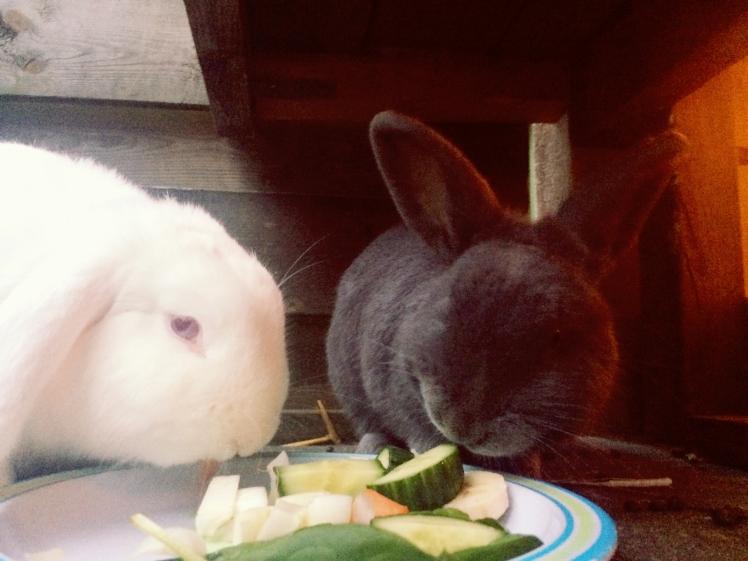 konijnen eten groente